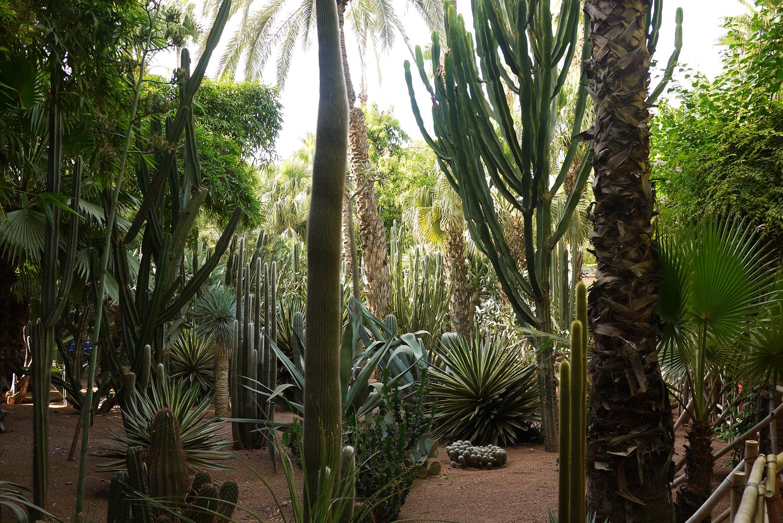 Marjorelle Cacti