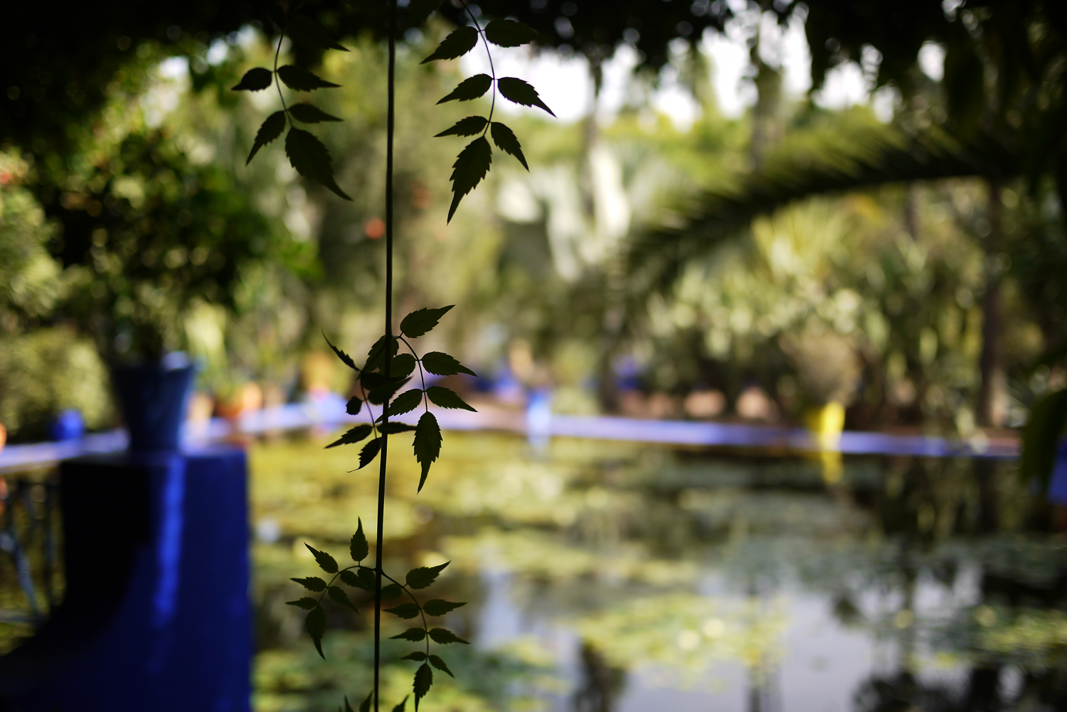 Marjorelle Lily pond 2