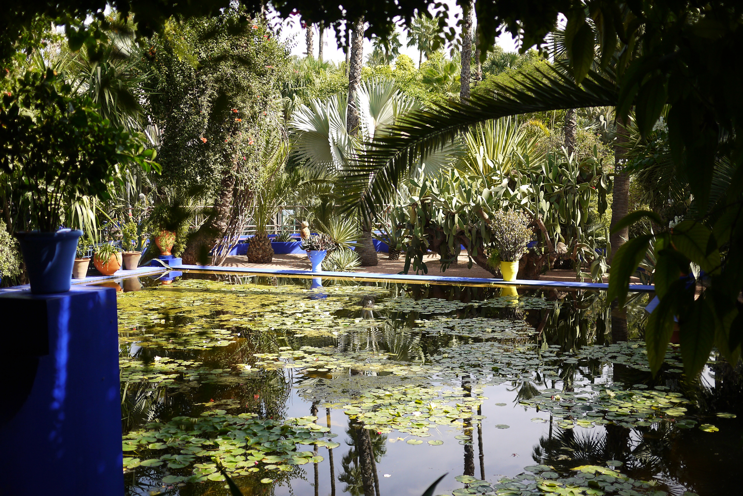 Marjorelle Lily pond